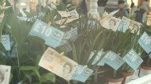 Save Britain: As 15 million Brits fail to save, Zopa.com hands out cash-laden 'money trees' to encourage people to grow their money