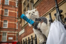 'Fat cat' lands on London railings