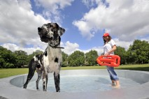 The dog bowl can hold up to 2000 litres of water providing an ample thirst quencher for pooches this summer