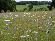 View of High Clandon summer meadow