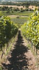 Escape to the vineyard with Mercure this summer